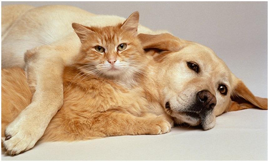 STJ decide que condomínio não pode proibir animais domésticos; saiba mais
