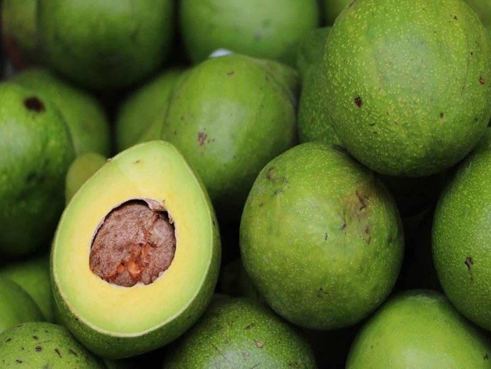 Óleo de abacate ajuda a emagrecer e tem mais 7 benefícios