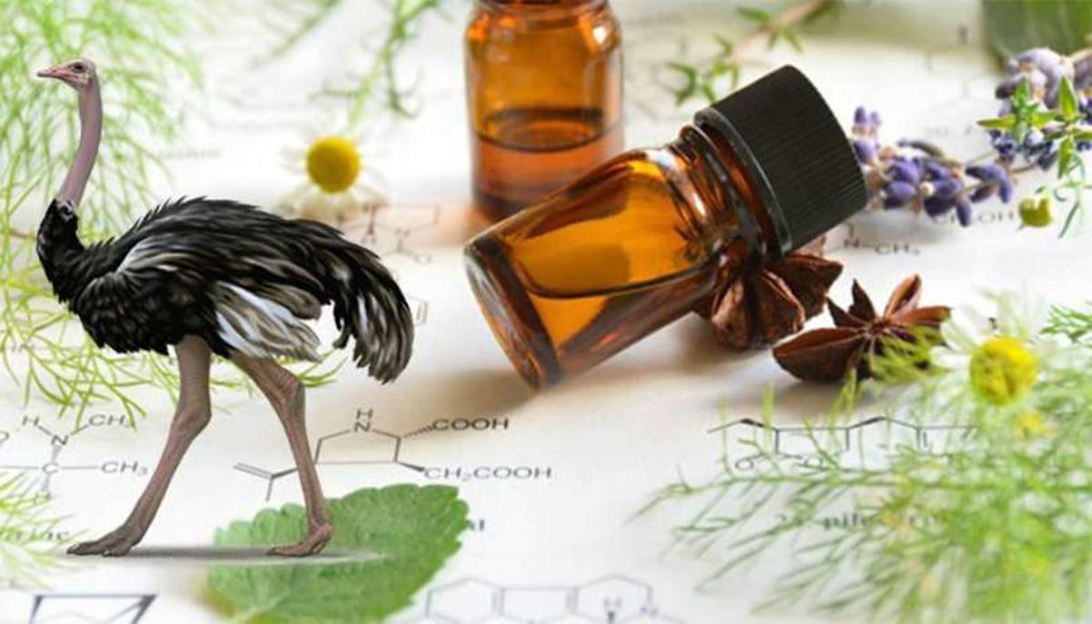 Óleo de Avestruz: Entenda como ele beneficia a sua saúde