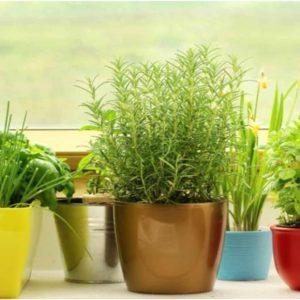 Plantas Lindas e Bem cuidadas